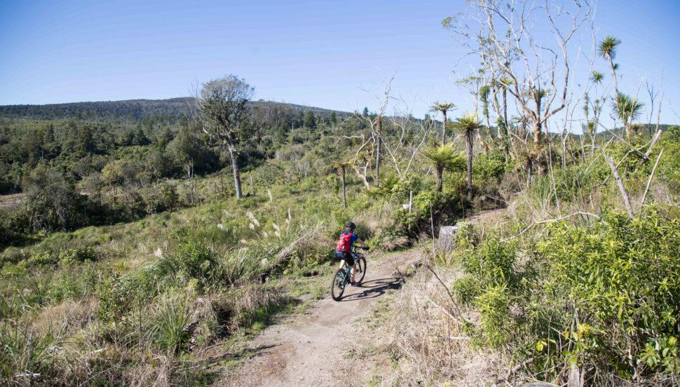 The Timber Trail Cycle Trail in 1 or 2 Days